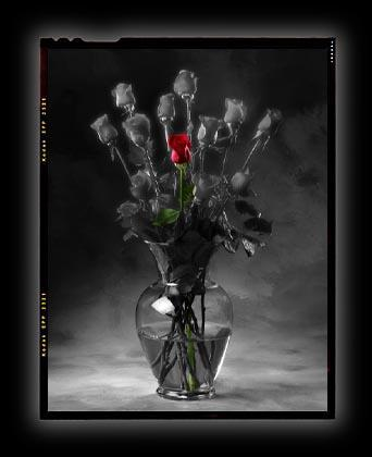 its death Red Roses black roses dead roses cute girls sex lol girls that
